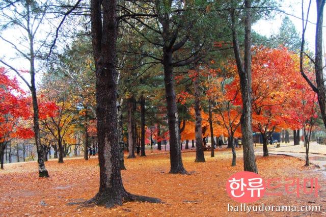 Korean autumn at Nami