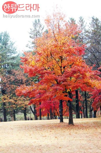 Korean autumn at Korea