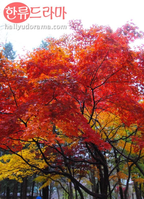 Korean autumn at Nami Island