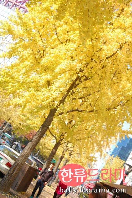 The Autumn Colors of Korea: Korean Autumn at Yeouido Park