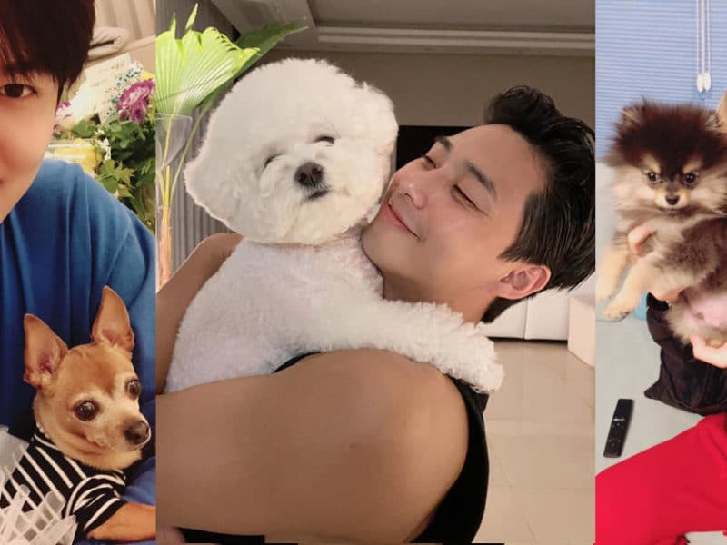 Lee Min-ho and Choco, Park Seo-joon and Simba, and V and Yeontan
